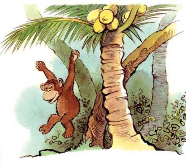 con khỉ và người đánh cá 9