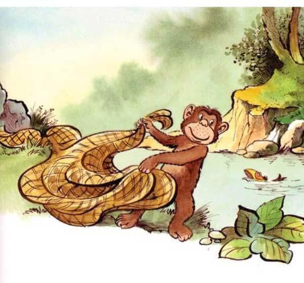 con khỉ và người đánh cá 10