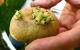 Khoai tây mọc mầm có độc không?