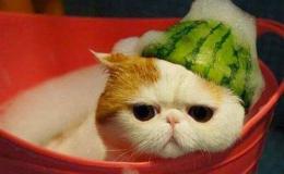 Truyện cổ tích : Mèo con bị ốm
