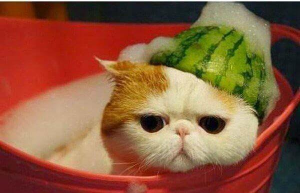 mèo con bị ốm