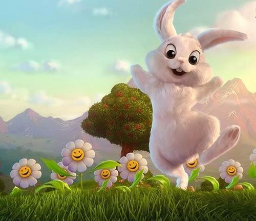 thỏ con nhận được hoa hướng dương