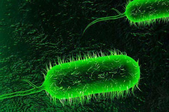 vi khuẩn