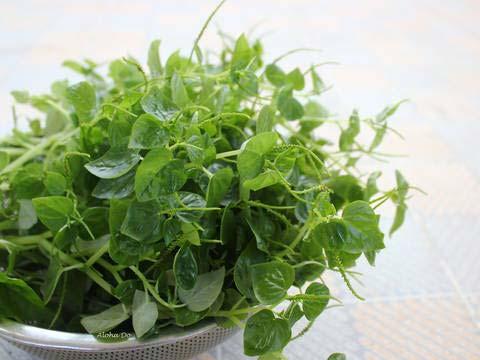 Rau càng cua là một trong những nguyên liệu chính để làm salad dầu giấm trộn rau càng cua