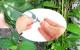 Các bài thuốc điều trị bệnh tiểu đường từ cây mật gấu