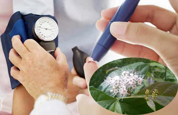 Hỗ trợ, điều trị cao huyết áp bằng cây xạ đen