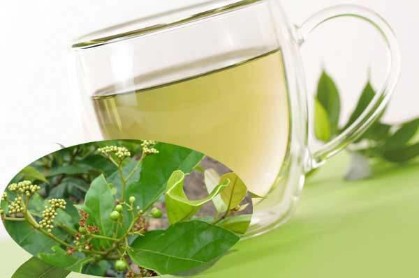 Nước xạ đen điều trị viêm gan, xơ gan hiệu quả