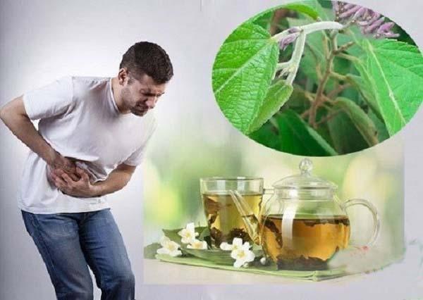 Bài thuốc chữa bệnh viêm gan từ cây an xoa