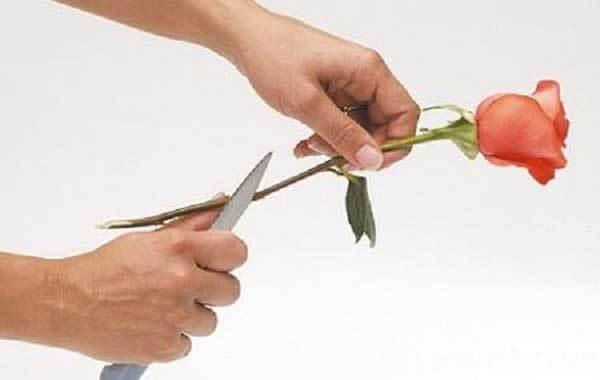 Các lưu ý khi cắt tỉa hoa