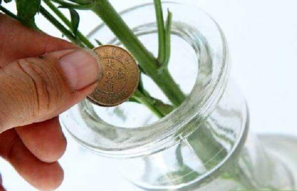 Cho đồng xu vào bình cắm hoa