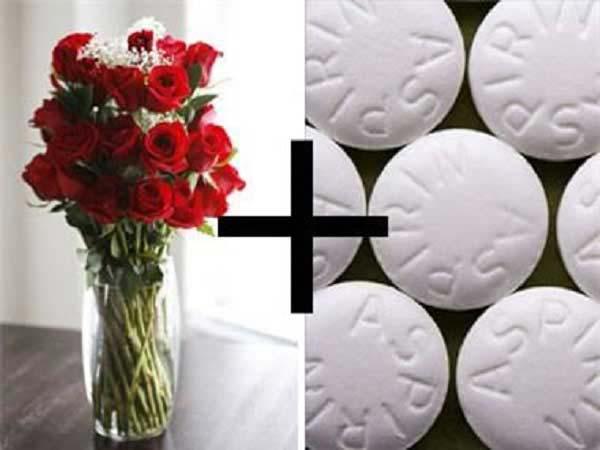 Cho thuốc aspirin vào trong nước cắm hoa