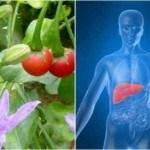 Hiệu quả chữa bệnh gan của cây an xoa