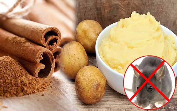 Đuổi chuột bằng quế hoặc khoai tây