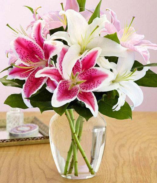 Cách chăm sóc hoa ly tươi và thơm lâu trong dịp tết