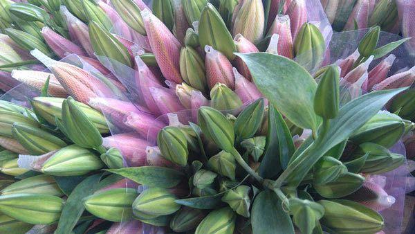 Hoa ly là loại hoa được các chị em rất ưu chuộng vào các dịp lễ tết