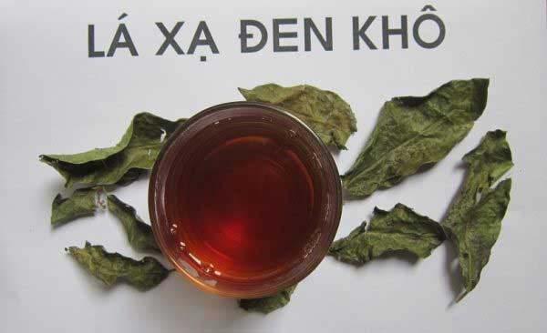 Bài thuốc từ lá cây xạ đen khô