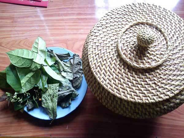 Bài thuốc từ lá cây xạ đen tươi