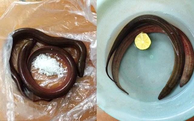 Mẹo làm sạch lươn không bị tanh