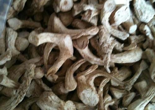 chân nấm hương
