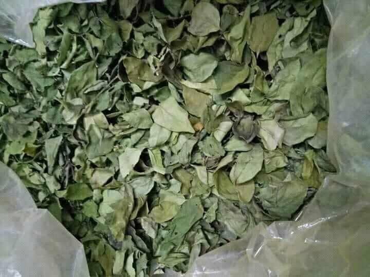 cách làm thạch găng từ lá