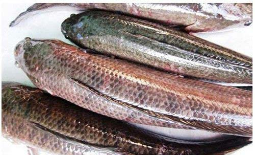 cách làm bánh canh cá lóc